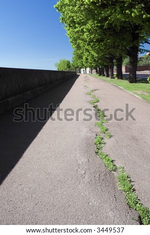 Grass breaking through a cracked asphalt footpath in a one row with a trees - stock photo