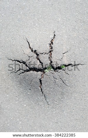 Grass broke through the crack in the pavement. Power of nature - stock photo