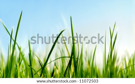 grass close to the ground view - stock photo