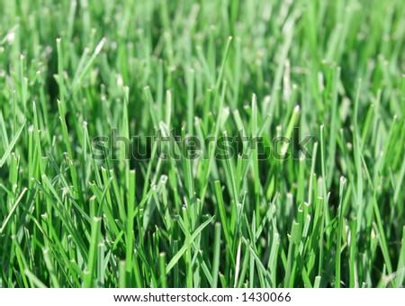 Grass Closeup - stock photo