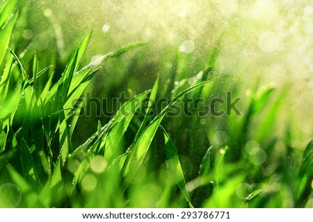 Grass closeup with fine water drops spraying down and creating a beautiful light effect background, shallow focus - stock photo