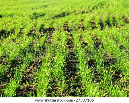 Grass curve rows 1 - stock photo