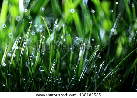 grass, dew, drop, freshness, natural background is green - stock photo