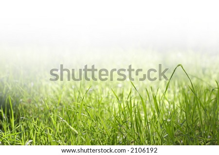 Grass faded to white - stock photo