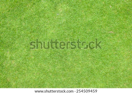 grass field - stock photo