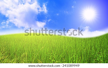 grass field and sky with cloud - stock photo