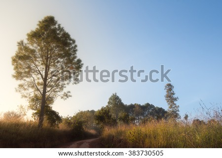 Grass field, bright blue sky, in the mist, nature - stock photo
