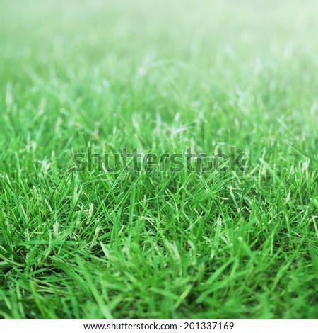 Grass field in sunlight - stock photo