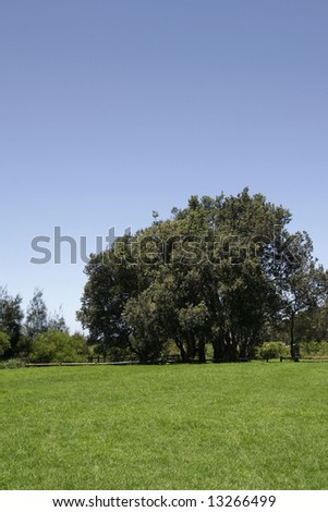 Grass Field, Large Tree, Clear Blue Sky - Sydney, Australia On A Sunny Summer Day - stock photo