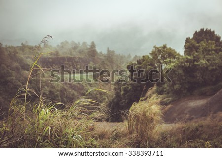 Grass field on mountain at Doi inthanon Chiangmai province,Thailand - stock photo