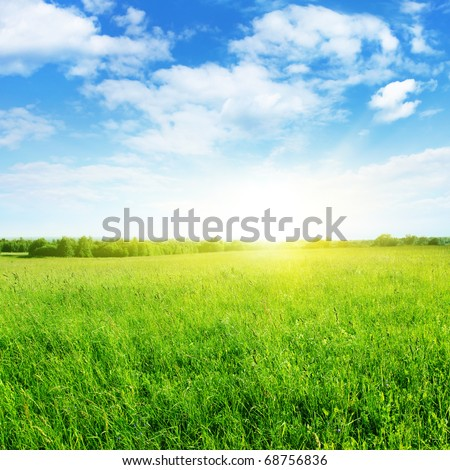 Grass field on sunny day.