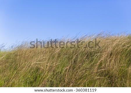 Grass Fields  Grass fields summer blue sky rural countryside landscape - stock photo