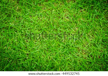 Grass floor on the golf course