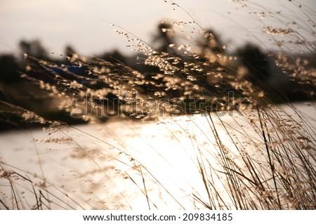Grass flower - stock photo