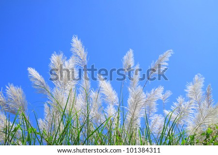 Grass flower and blue sky - stock photo