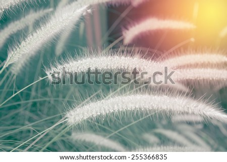 Grass flower close up. Vintage filter - stock photo