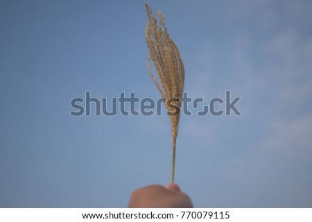 Grass flower on hand in the garden