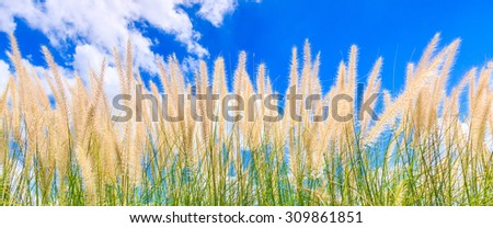grass flowers - stock photo
