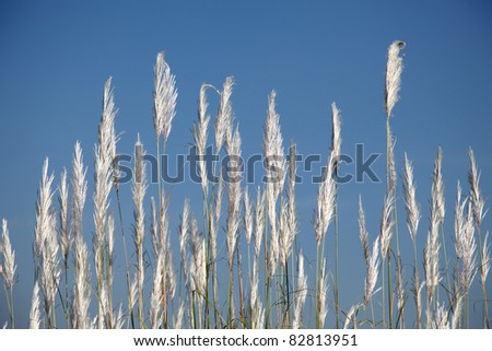 Grass Flowers with Blue Sky Background