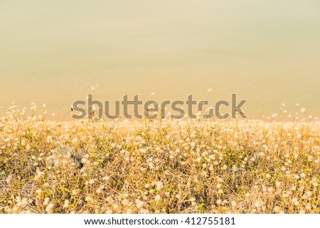 Grass flowers with water background, Thailand - stock photo