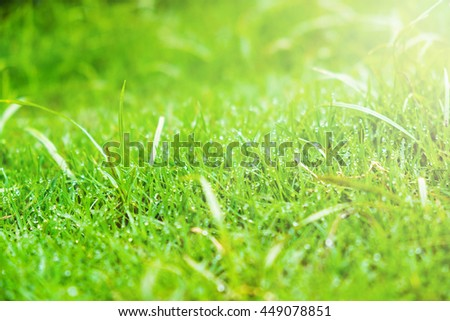 Grass.Fresh green spring grass with drops water.Soft focus.Abstract Nature background - stock photo