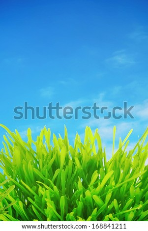 Grass green over blue sky