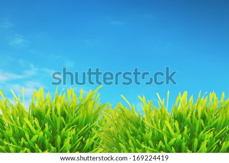 Grass green over blue sky - stock photo
