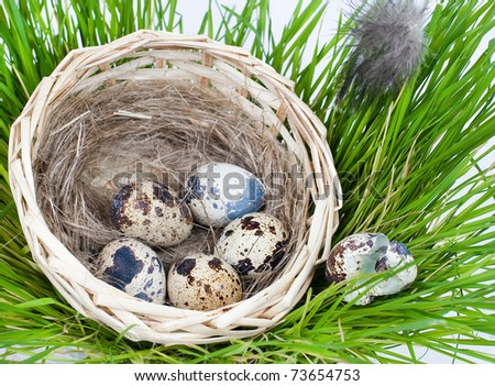 Grass, green, wheat, spring, a basket, straw