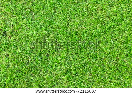 Grass grow in the park, Central Region. - stock photo