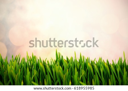 Grass growing outdoors against sun is up