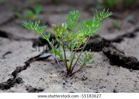 Grass grows in the ground covered with cracked by drought - stock photo