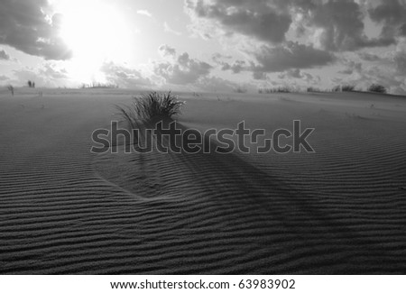 grass grows on the ground - stock photo