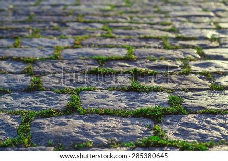grass grows through pavement - stock photo
