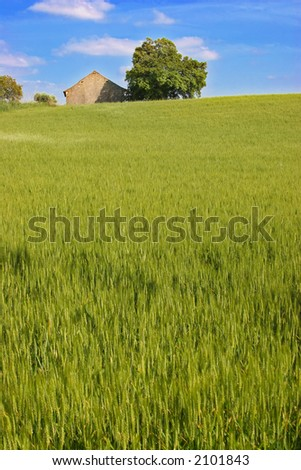 grass hill - stock photo