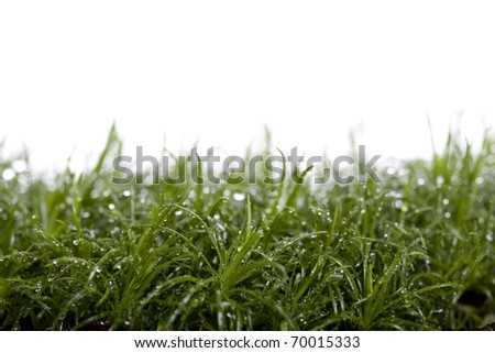 Grass in a studio.