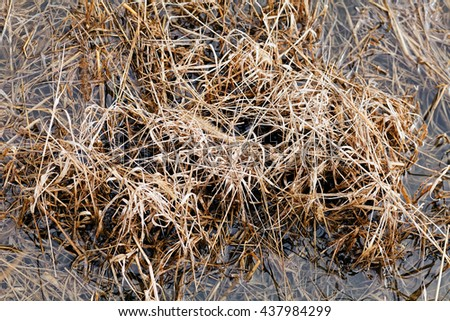grass in autumn or spring, note shallow depth of field