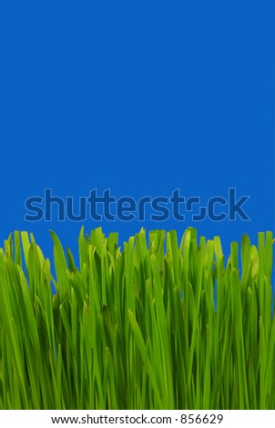 Grass in Deep Blue Sky - stock photo