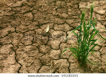 Grass in dried cracked mud - stock photo