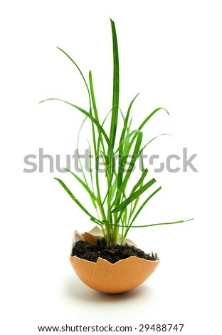 Grass in egg - stock photo