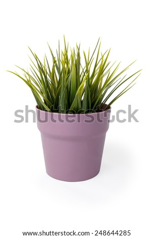 grass in flowerpot isolated on white background - stock photo