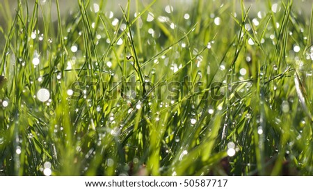 Grass in morning with dew - stock photo