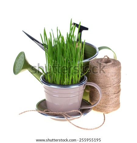 Grass in pot and garden tools isolated on white  background. Gardening concept.