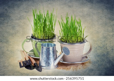 Grass in pots and garden tools. Gardening concept.  - stock photo