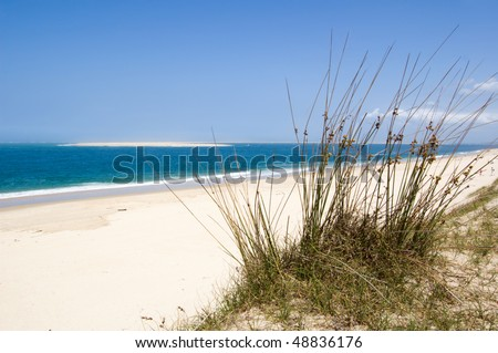 grass in sand dunes in front of the ocean - stock photo