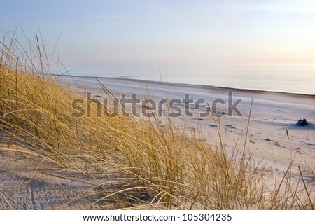 grass in sand dunes in front of the sea, evening time - stock photo
