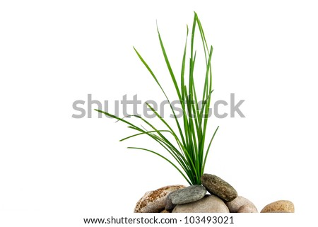 Grass in stone - stock photo