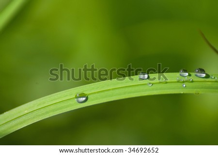 grass in the droplets
