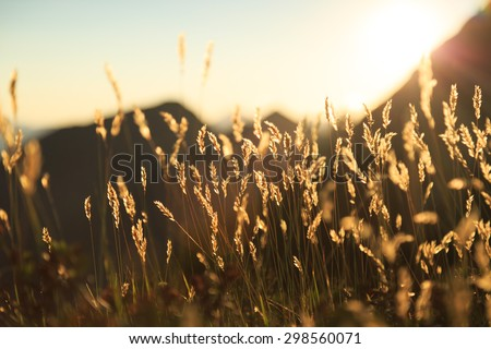 Grass in the last sunlight during a warm sunset in the Swiss mountains. Shallow D.O.F. - stock photo