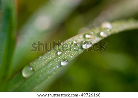 Grass in the morning with the water drops