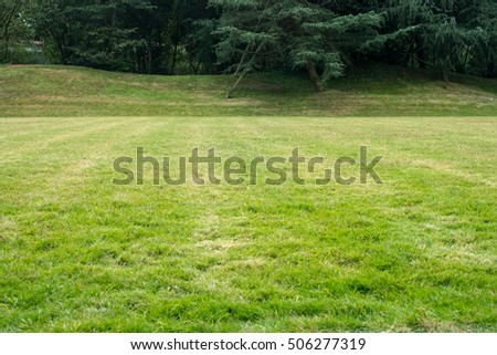 grass in the park